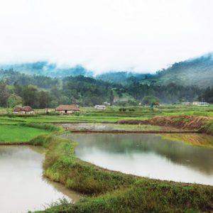 Rice, Timor-Leste