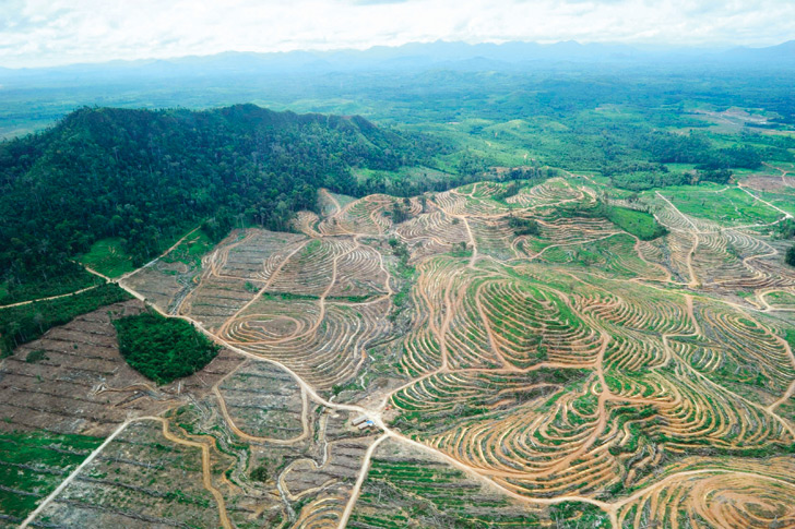 Palm oil juggernaut swats away industry reform efforts
