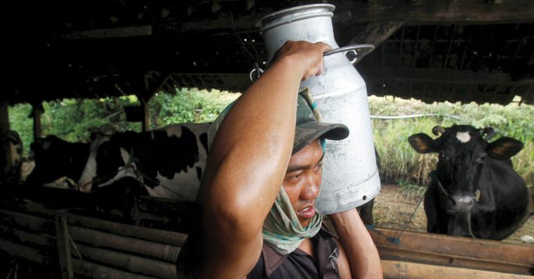 A dairy love affair