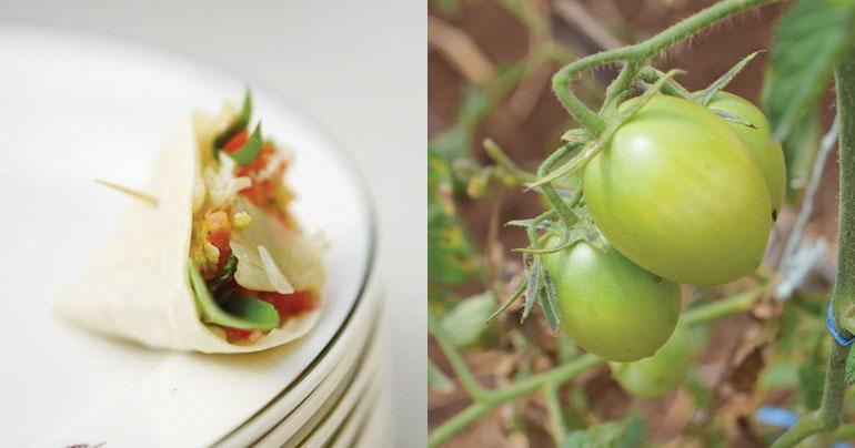 Cesar Gaio_Dili_Bebora_Timor-Leste_Dilicious_tomatoes_Southeast Asia Globe 2018