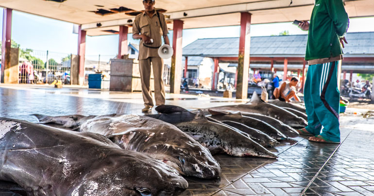 shark market_Lombok_Indonesia_The Dorsal Effect_Caroline Pang