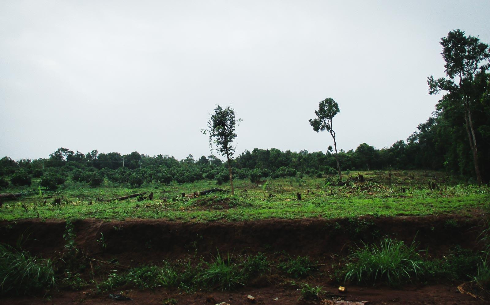 Deforestation near the Bunong village of Andong Kralong. Photo: Tabitha Payne