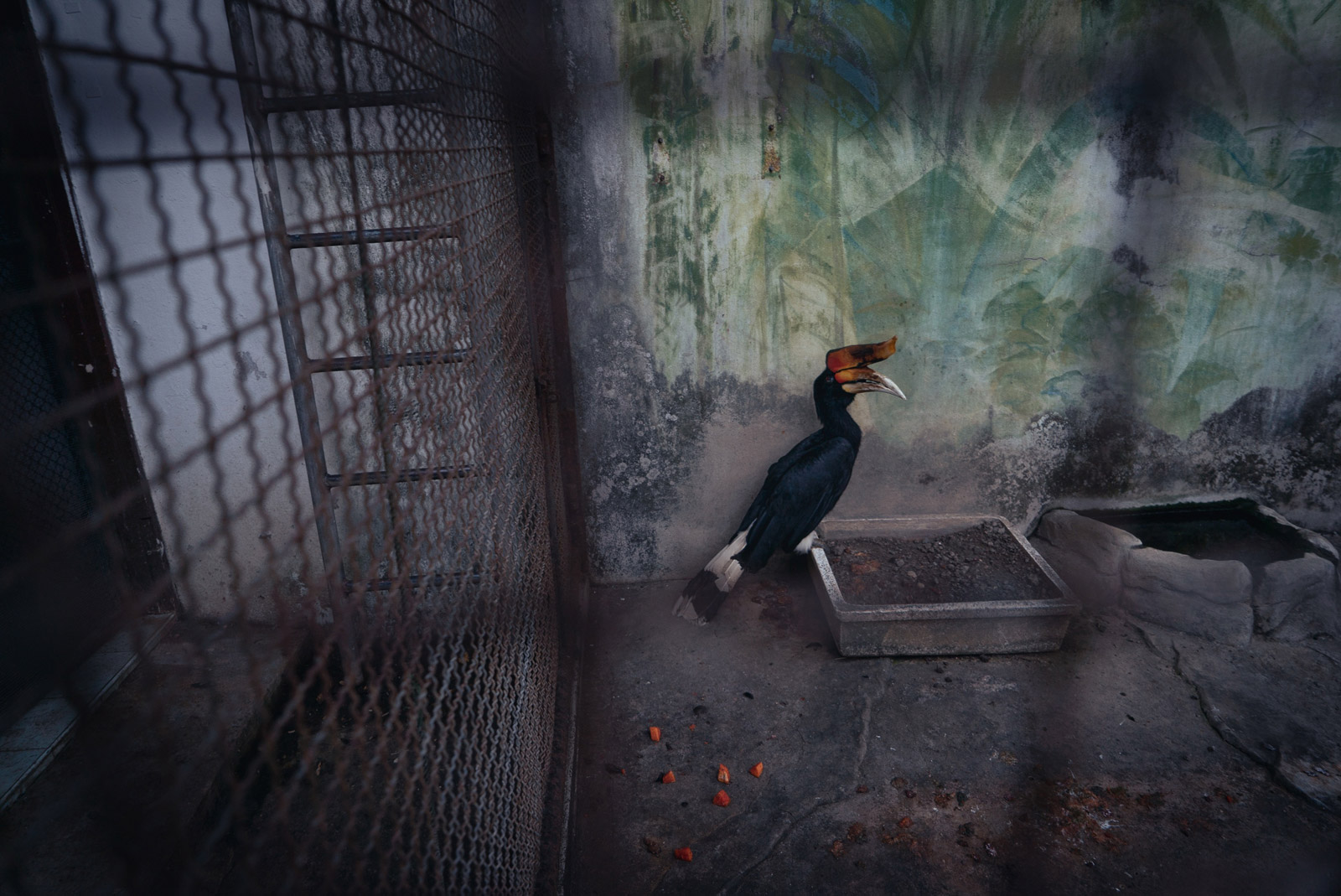 [Photos] Inside Pata, the 'World's Saddest Zoo' in Bangkok