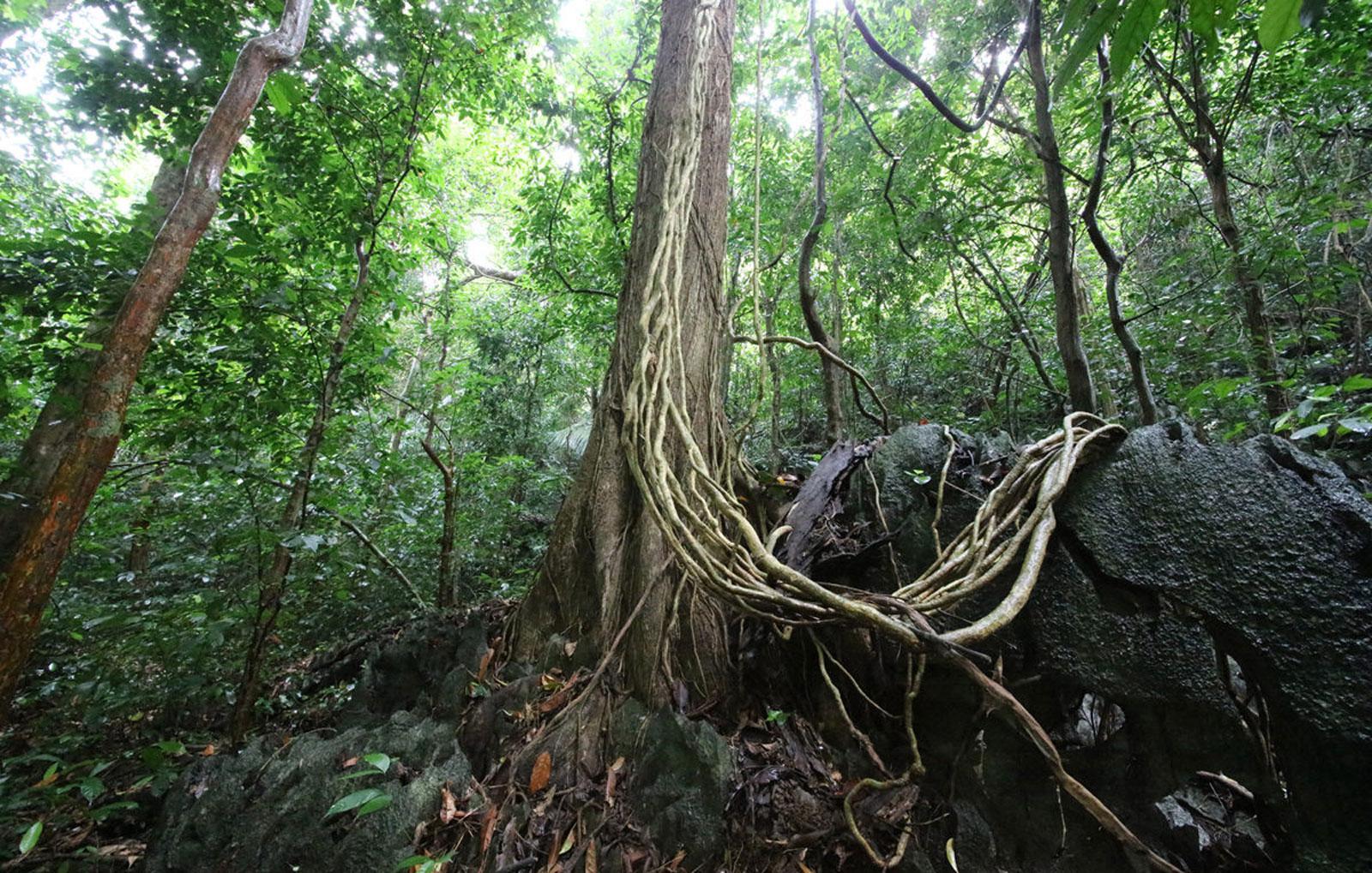 'Drastic forest development': Vietnam to plant 1 billion trees – but how?